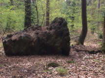 A large rotting stump among the trees- a haven for invertebrates.