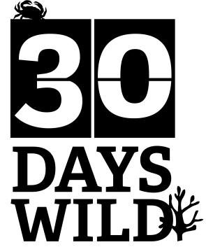 30DAYSWILD_ID3 black