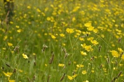 The beautiful meadow at The Vyne