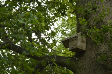 A bird box squatted by bees