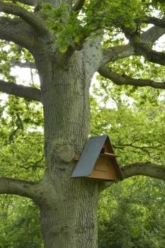 The barn owl box- is anyone home?