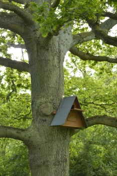 The barn owl box- is anyone home?