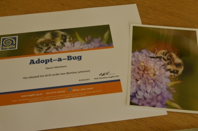 My shrill carder bee adoption pack