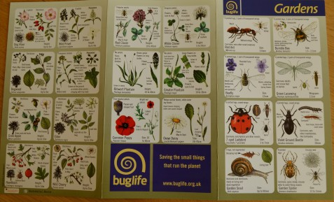 The ID card from Buglife