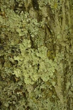Fabulous lichen