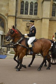 Beautiful cavalry horses