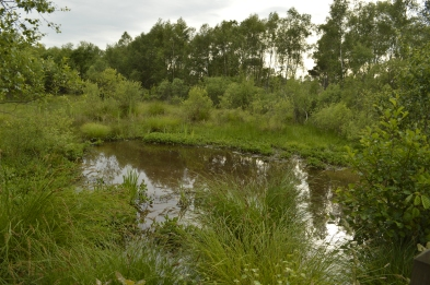 One of the ponds