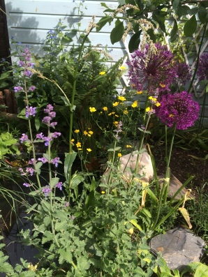 The bees favourite area of the garden- the wild flowers and alliums next to our pond.
