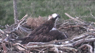 Footage from the Dyfi webcams