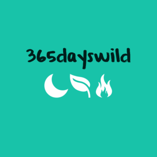 365dayswild0a0a0a0a28moon2928feather2928fire29-default