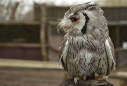 Alphabet Dating: F is for Falconry